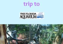 travel review the florida aquarium